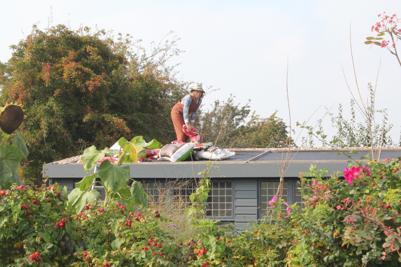 use-a-lightweight-growing-medium-on-a-living-roof