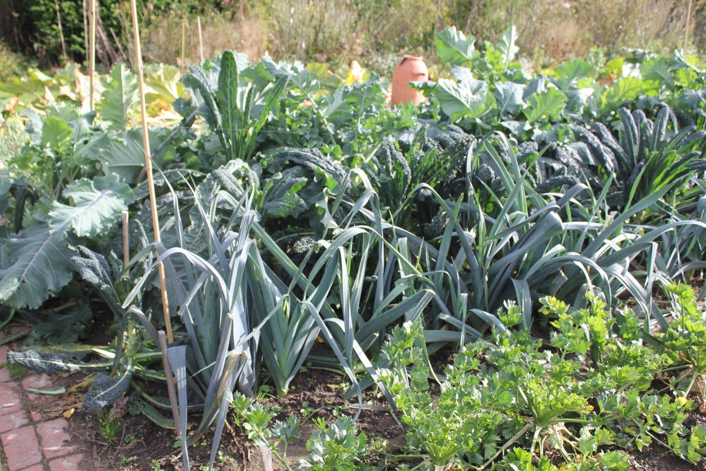 Leeks and celeriac