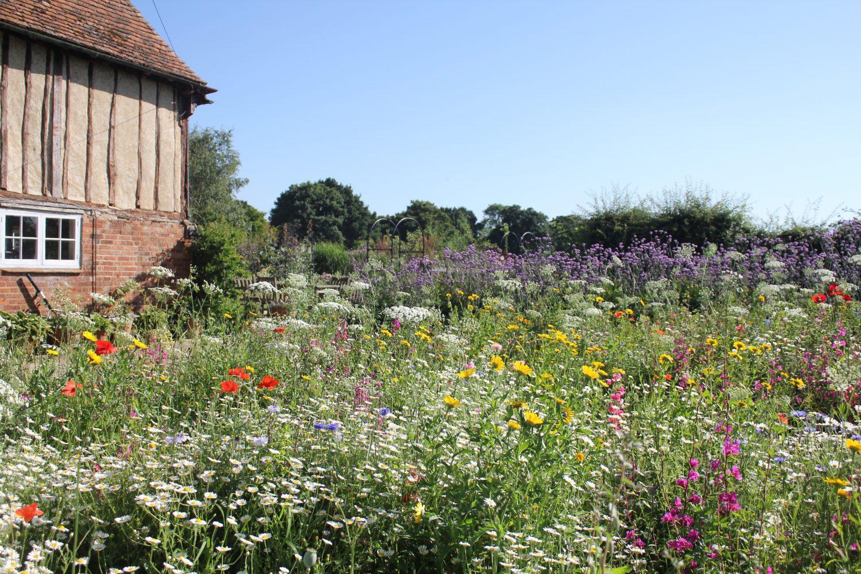 Pictorial meadow in Jo's garden