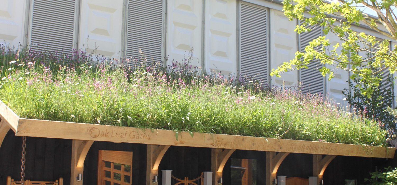 Roof top meadow